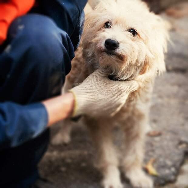 Маленькая собачка выживала в доме своего хозяина только благодаря доброте соседей болонка, история, порода, приют, собака
