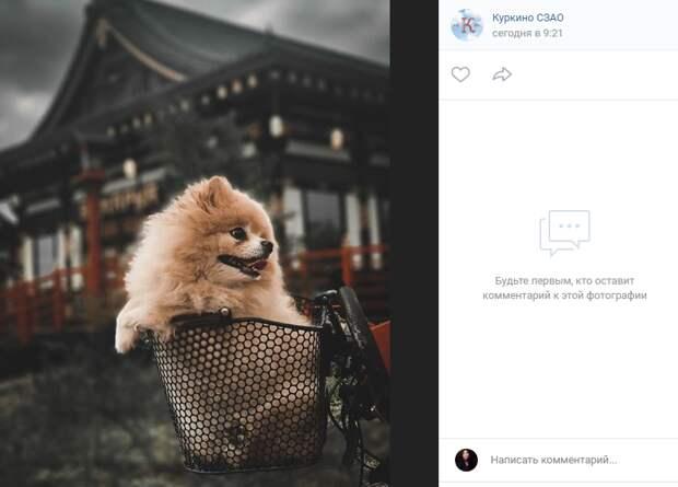 Фото дня: четвероногий блогер посетил «маленькую Японию»