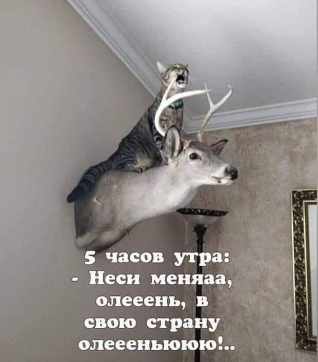 Возможно, это изображение (олень и текст «5 часов утра: -неси меняаа, олееень, 8 свою страну олеееньююю!..»)