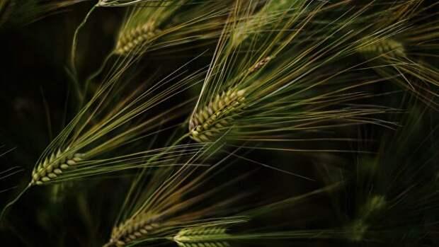 Снижение урожая не отразится на внутреннем рынке Кубани, заявили власти
