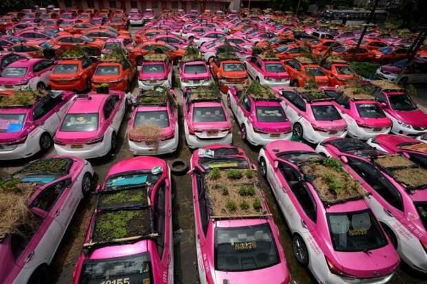 В Таиланде на крышах такси начали садить огород
