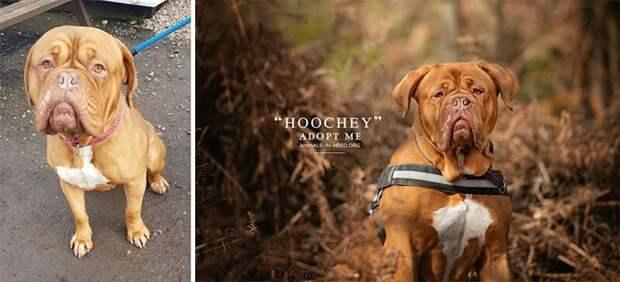 3. Хучи животные, помощь, портрет, приют, собака, фотограф, хозяин