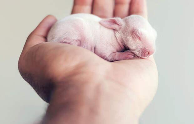 Осторожно, разрыв мимиметра: фотосессия новорожденного кролика