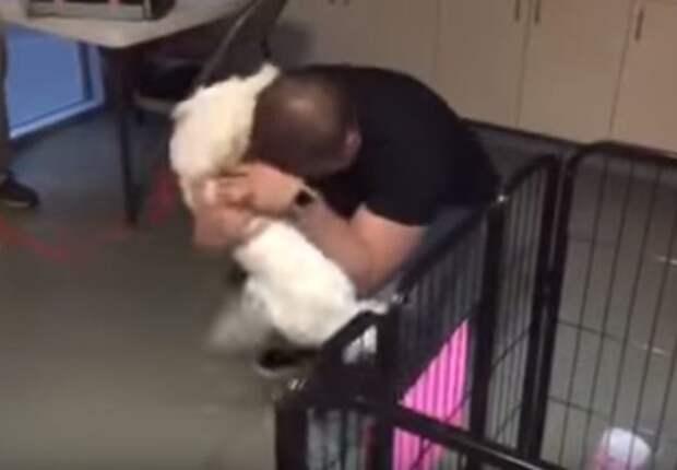 После 22 дней в приюте потерянная собака не может сдержать эмоции при встрече с хозяином
