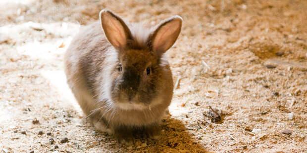 Зоологи объяснили, почему не бывает больших зайцев и кроликов