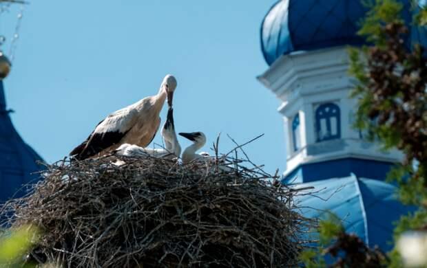 5 мест с птицами: где можно снять и посмотреть