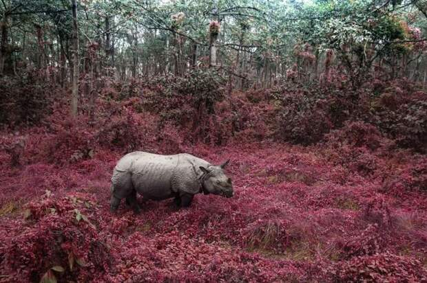Национальный парк Читван, Непал. Автор фотографии: Таня Шарапова (Tatiana Sharapova).