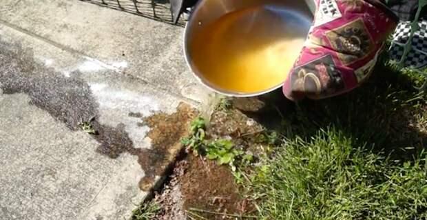 Заливайте муравейник, пока кипяток не остыл.