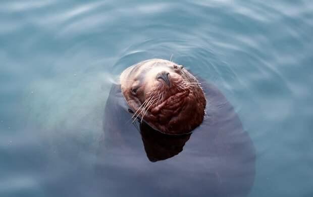 «Подумал, что, видимо, все». Как серфер спасался от тюленей на Курилах