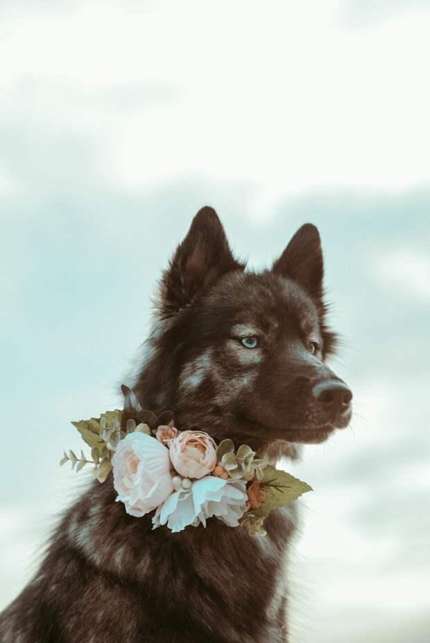 6. Я не принцесса, меня не нужно спасать. Я королева жизненная позиция, жизнеутверждающие, канада, собаки, философия жизни, фото собак, фотограф, хаски
