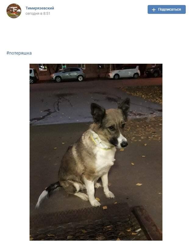 Фото дня: потерявшийся пес на Вутечича