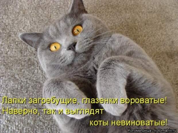 Классная котоматрица для всех