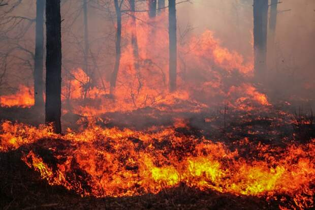 Площадь лесных пожаров в России за сутки выросла почти на 60 тыс. га