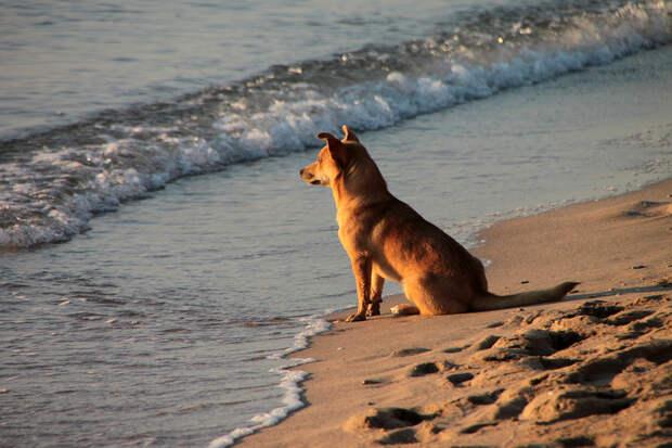 В Сочи избили пришедшего на пляж с собакой мужчину