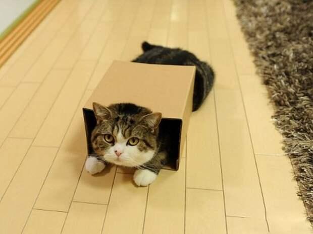 Фотографии замечательного кота Мару.