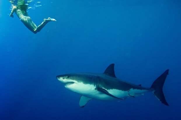 9. Акулы способы учуять кровь на расстоянии многих километров МИФ И ПРАВДА, животные, животный мир, интересные факты, миф, познавательно, факты о животных