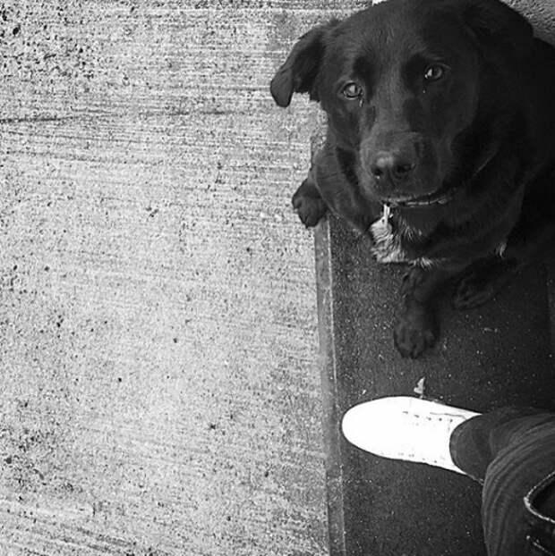 Собака пропавшего футболиста «Кардиффа» до сих пор ждёт его дома
