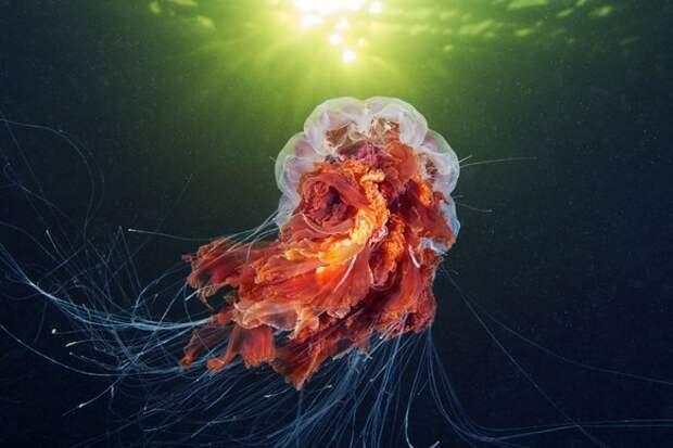 Обитатели морских глубин в фотографиях Александра Семёнова