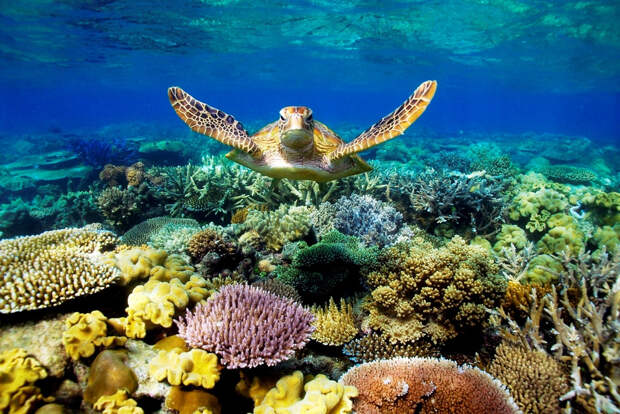 ТУРИЗМ, ПУТЕШЕСТВИЯ, ЭКСКУРСИИ. Большой Барьерный риф (Great Barrier Reef)
