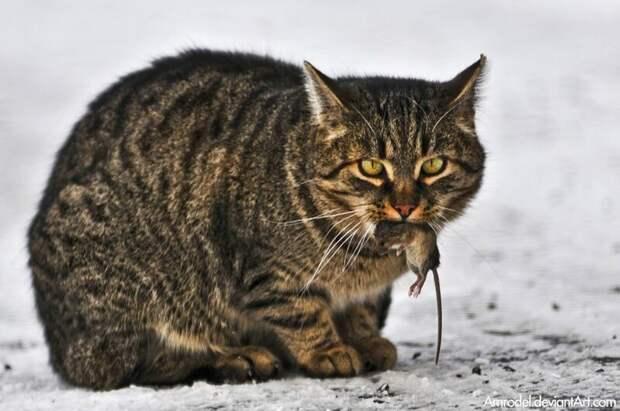 Зов предков животные, коты, это интересно