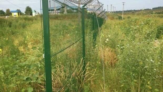 Кабаны подрыли украинскую стену на границе с Россией
