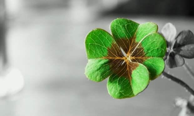 Знаки удачи: как понять, что скоро в вашу жизнь ворвутся перемены к лучшему