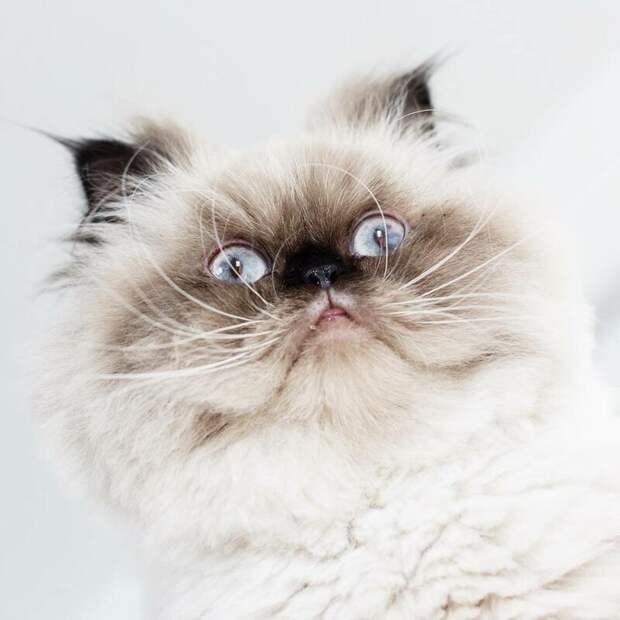 Но такая вот у него мимика! животные, кот, милота, мимика, морда, ненависть