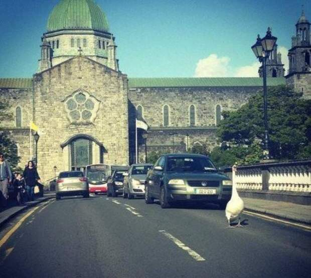 Приколы из Ирландии