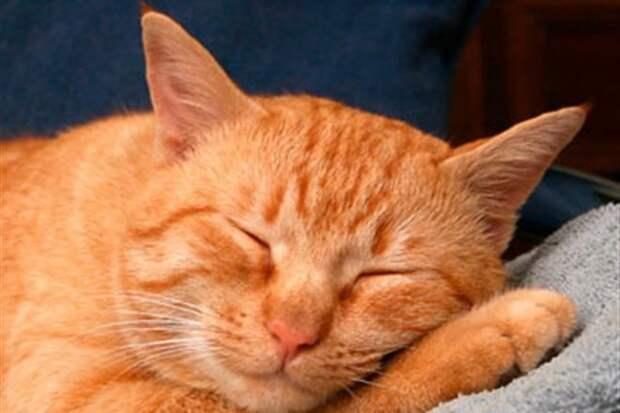 Пассажир маршрутки купил билет бездомному замерзшему коту