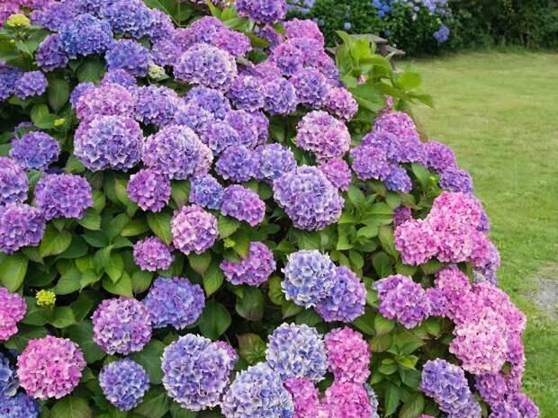 Какие цветы поднимают настроение: то о чем вы не знали
