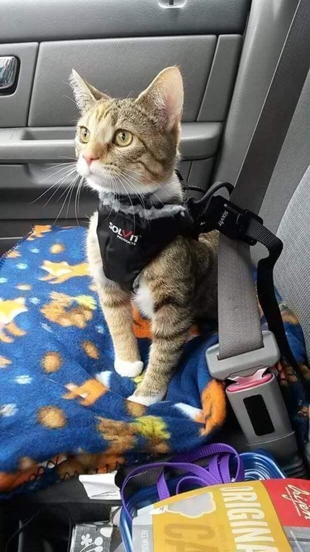 ремень безопасности игрушки для животных, коты, собаки