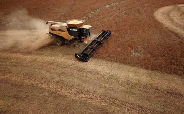 Китай запретил импорт сельскохозяйственной продукции из США