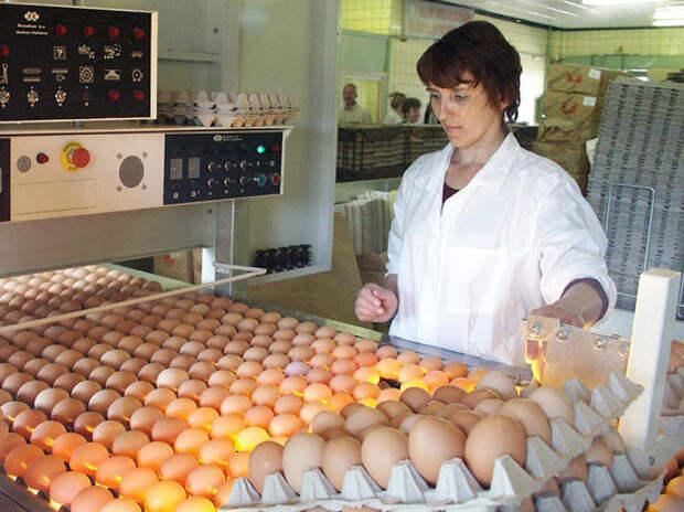 Куры и яйца стремительно дорожают, власть задумалась о регулировке цен