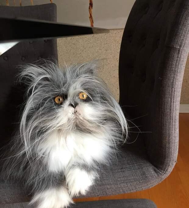 7 угарных фото кота Атчума, который похож на сумасшедшего профессора