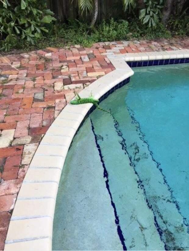 Циклон-бомба! В солнечной Флориде так холодно, что игуаны замерзают и опадают с деревьев!