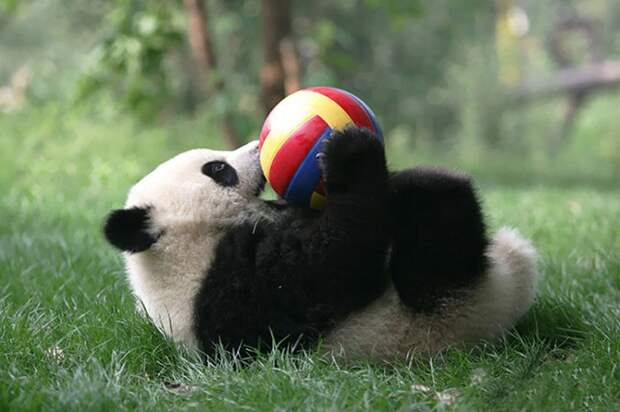 9 милых фото из детского сада для малышей панд, которых хочется потискать