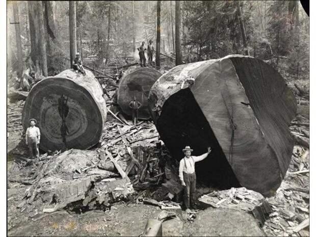 Когда деревья были огромными ( Не моё)
