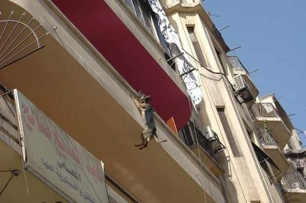 Овчарка спасла себе жизнь, выбросившись с балкона