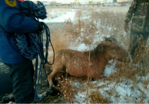 Люди спасли вмерзших в лед лошадь и жеребенка