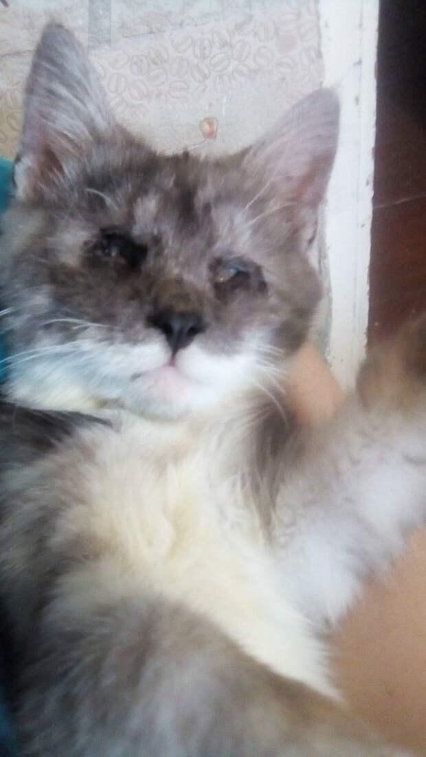 Больной кот сидел посреди улицы. Его глаза были залеплены гноем и он ничего не видел
