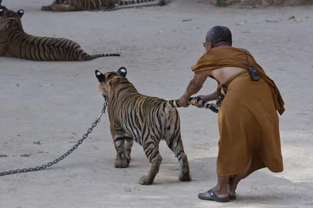 Тайны Тигриного монастыря