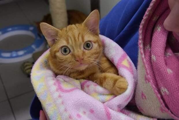 Любовь женщины спасла котёнка с серьезными врожденными недугами