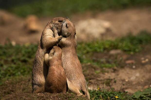 25 фото о том, почему мама - она и в Африке мама