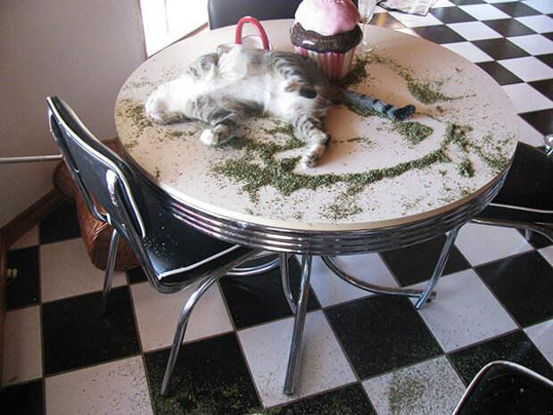 Перебрал животные, забавно, изменение сознания, кошачья мята, кошки, растения, смешно, фото