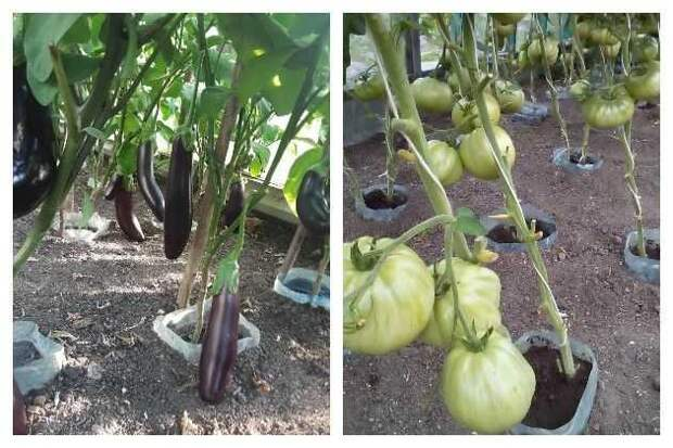 овощи в пластиковых емкостях