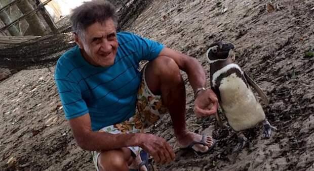 Дружба на расстоянии: пингвин преодолевает тысячи километров каждый год, чтобы повидаться со своим спасителем