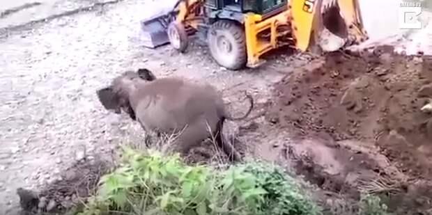 Из канавы торчали ноги! Одинокий малыш застрял в яме вниз головой — пришлось его выкапывать