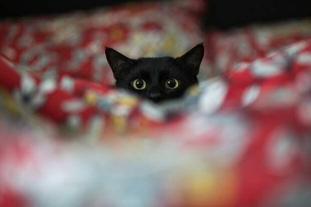 С добрым утром! коты, настроение, утро