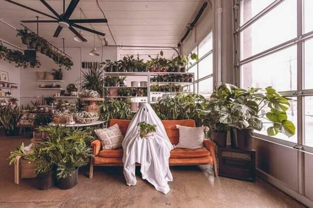 Зелени много не бывает: жильё любителей растений