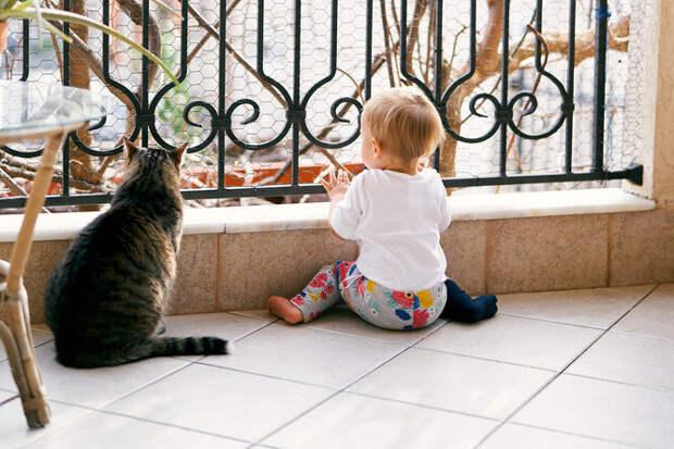 Обошлось безтрагедии: ребенок пытался вылезти сбалкона, но вмешался кот